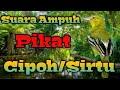 Suara Ampuh Pikat Cipoh Sirtu Cipoh Sirtu Ampuh Pikat Burung Kecil Kombinasi Kutilang Ribut Gacor  Mp3 - Mp4 Download
