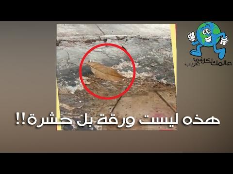 حشرة الورقة هل شاهدتها من قبل سبحان الخالق