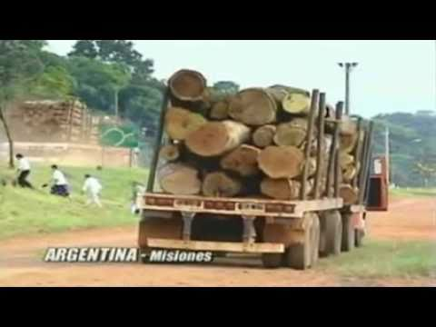 Genetically Engineered Trees - The Increasing Threat  / Docu