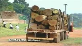 Genetically Engineered Trees - The Increasing Threat  / Documentary Video