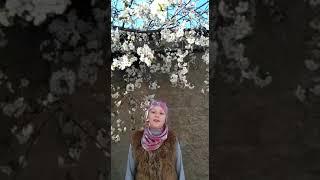 Фомина Алиса