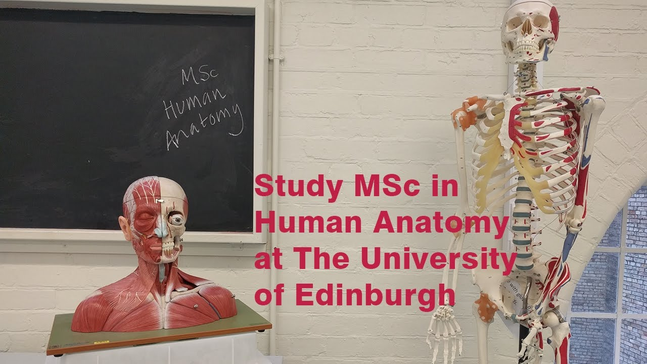 Study Msc In Human Anatomy At The University Of Edinburgh Youtube