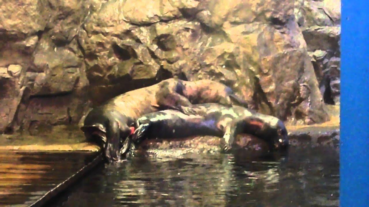 Смотреть секс видео в океанариуме