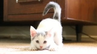 THESE KITTEHS ARE SO FAST