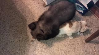 Медвежонок Том и кот Лео