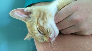 Baby Cats | Cute And Funny Cat Videos Compilation #123 | Cute Cats Land