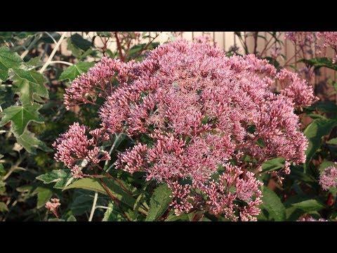видео: Самые неприхотливые растения, которые растут очень быстро