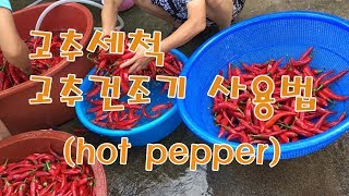 고추세척후 고추건조기사용방법  [ hot pepper,…