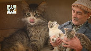 Bir Kedi Aç Kalsa Ben O Gece Uyuyamam Kedilerin Babası Hasan Amca