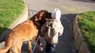 Dogues De Bordeaux Hommage D'une Petite Fille A Son Chien