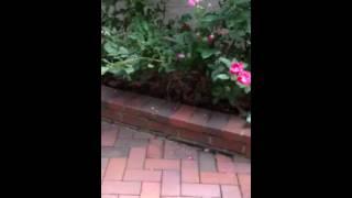Brick Garden Border Brentwood Nashville Tennessee