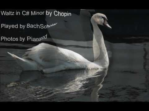 Chopin. Waltz in C# Minor op. 64 no. 2. Played By BachScholar (Photos by Pianopod)