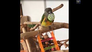 Birds Funny Videos 2019