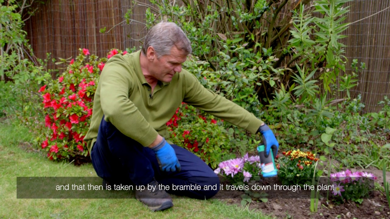How To Treat Brambles In Your Flowerbed With Roundup Weedkiller Gel
