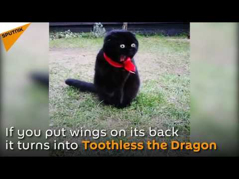 Tingeling, The Cat Who Is Always Ready For Action
