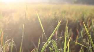 Baixar Take Me Home - US (UnOfficial Lyric Video) by @nooraditama