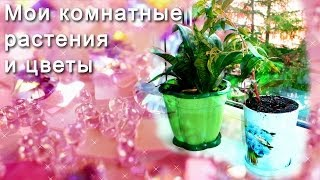 мои комнатные цветы видео