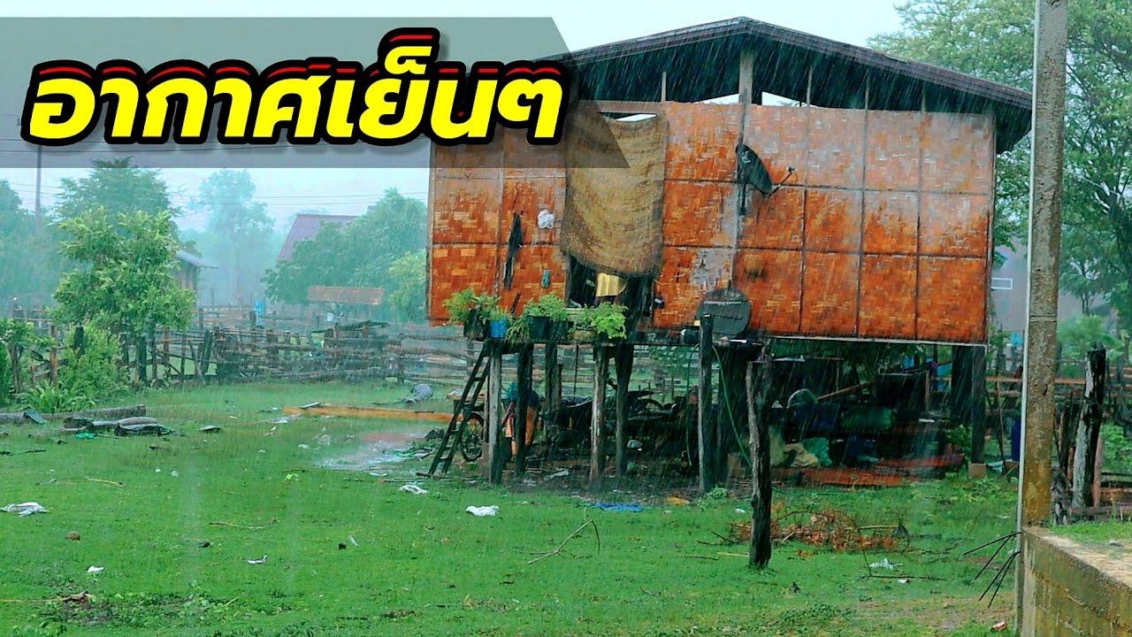ดีใจหลายฝนตกลงมา