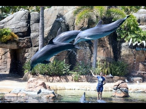 Dolphin Show Imagine At Sea World Gold Coast