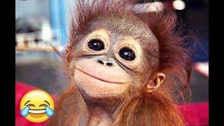 САМОЕ СМЕШНОЕ ВИДЕО ПРО ЖИВОТНЫХ ЧАСТЬ 1/ THE FUNNY VIDEO ABOUT ANIMALS PART 1 (2018)