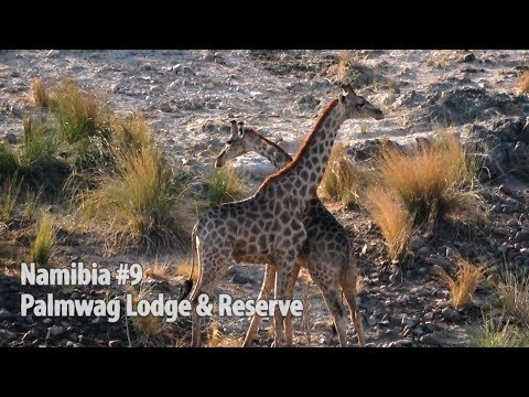 Namibia Part9: Palmwag Concession & Lodge, Sundowner Safari