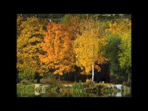 Herbst. Stimmungsvolle Bilder, Farben und Töne.