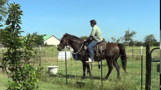 6 of 8 - New Guy With No Horse Exp Saddles Up Mr. T & Rides Him First Time