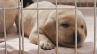 2012年6月23日(土)ロードショー】 日本一のダメ犬ラブラドールが日本中...
