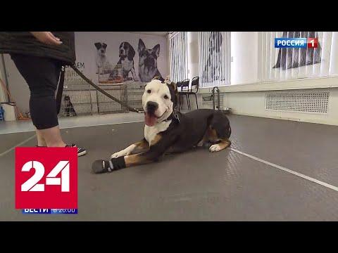 Бойцовская собака загрызла бездомного пса, защищавшего детей Россия 24