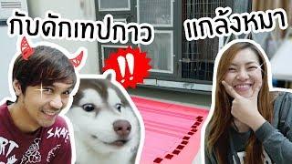 หมา-vs-เทปกาว-แกล้งหมาสติแตกด้วยกับดักเทปกาว