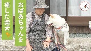大切な家族を亡くしたおばあちゃんに、柴犬が与えてくれたもの…🐕💕【PECO TV】 thumbnail