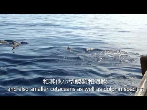 OPCF USSP 2012 Marine mammals status assessment and conservation in Bohol (HKUST)