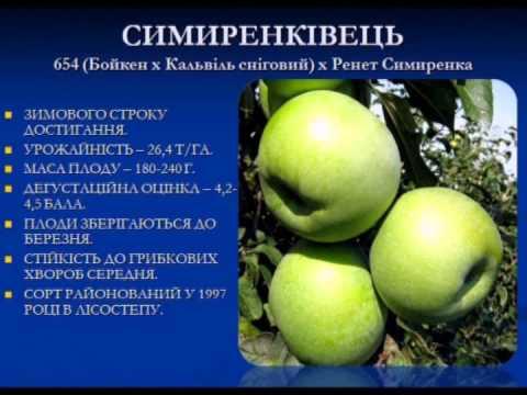 Крупномер яблони «Голден Делишес»