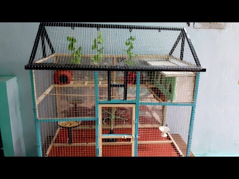 Love Birds Cage - House