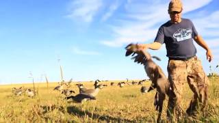 Beyond The Hunt - Legendary Geese - Outdoor Channel