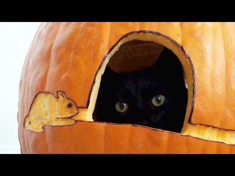 Black Cat's First Pumpkin!