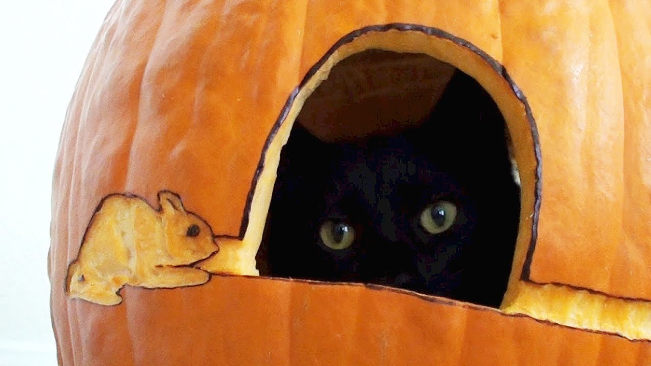 Black Cat S First Pumpkin Youtube