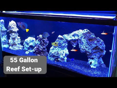 55 Gallon Saltwater Tank (links to products below)
