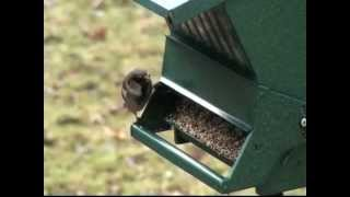 20 March - World Sparrow day