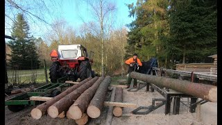 Building a shed out of Green lumber direct from the forest. A logging, sawing, and building video