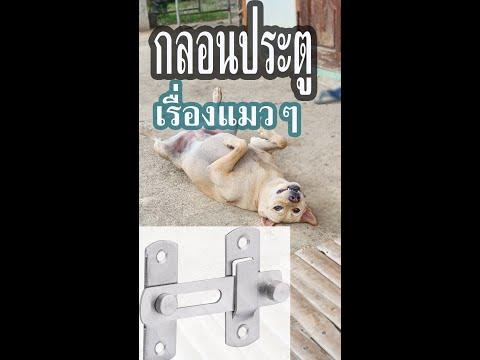 กลอนประตูมันเรื่องแมวๆ