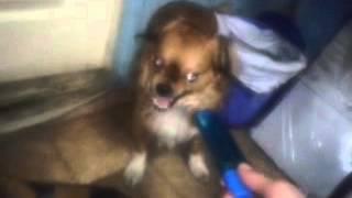 Долбаеб долбит собаку! !!