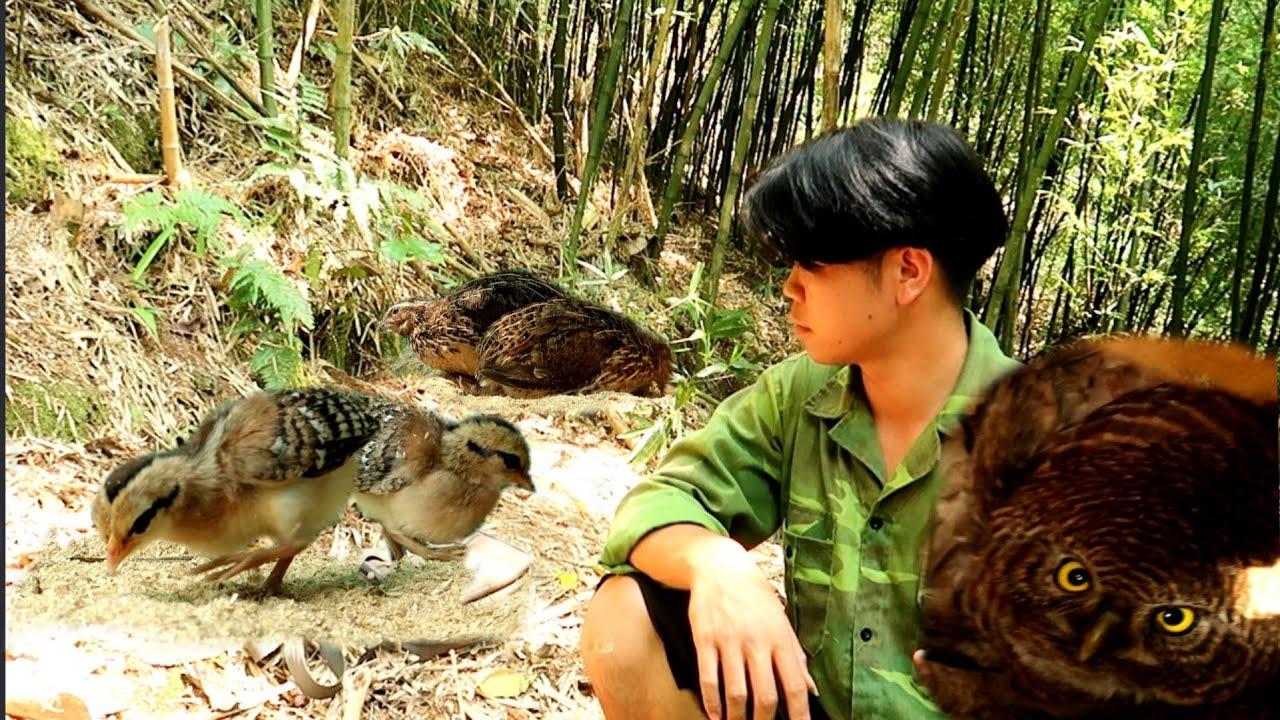 Môi Trường Mới Gà Rừng Và Thăm Tổ Chim | Dân Tộc Tây Bắc Tv