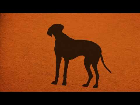 Joel Silverman's Dog Trainer Certification Course  Part III