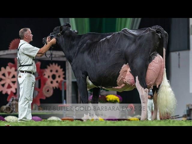 Vente d'embryons Holstein Québec