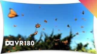 Mexico's Monarch Butterfly Migration in VR180