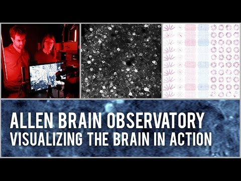 Allen Brain Observatory: Visualizing the brain in action
