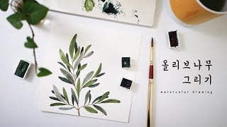 올리브나무 수채화 그리기 (Olive Branch Watercolor Drawing) #이랑그림