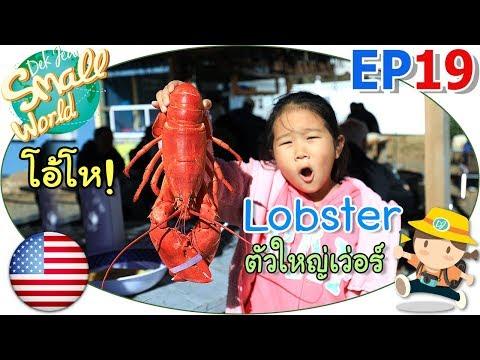 เด็กจิ๋ว@USA Ep19 ล็อบสเตอร์อเมริกา ตัวใหญ่จัง (Lobster) - วันที่ 24 Nov 2018