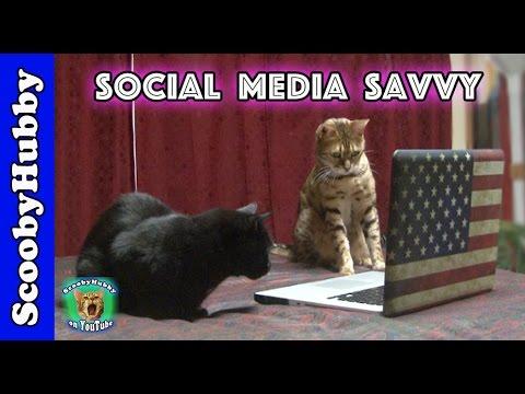 Social Media Savvy -- Cat Clips #324